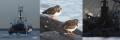chalut oiseaux ferraille